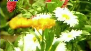 Một mùa xuân nho nhỏ - Anh Thơ
