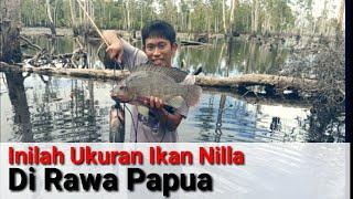 Berburu Ikan Nilla di Pedalaman Papua