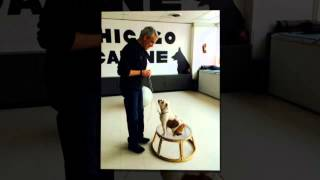 Puppy Obedience School | Chicago, Il – Chicago Canine Academy