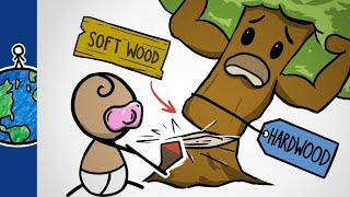Why Hardwoods Are The Softest Woods