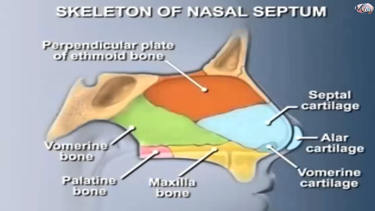 ENT / 3D - nose 1 - Anatomy of nose . - YouTube