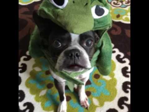 I am turtle hear me roar