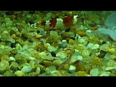 Planaria vs Detritus worms how to tell the difference