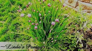 ~first 2015 Garden Update With Linda's Pantry~