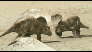 Protoceratops .