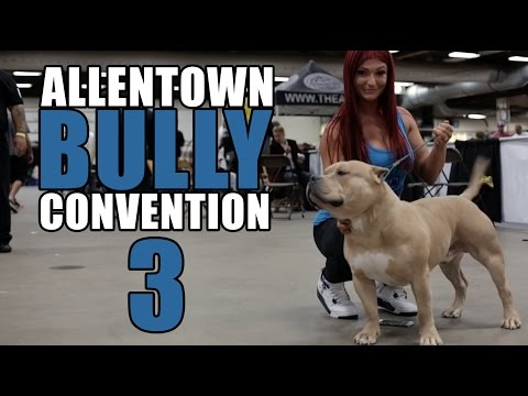Halloween Bully Show | Allentown Bully Convention 3