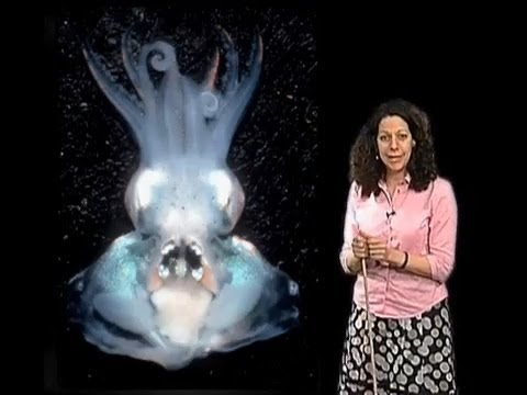 Bonnie Bassler (Princeton) Part 1: Bacterial Communication via Quorum Sensing on YouTube