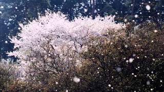 松任谷由実 春よ、来い ~instrumental~