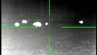 Field Full of Wild Hogs - Thermal Night Vision Wild Hog Hunt