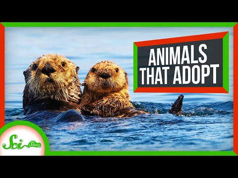 Why Animals Take Care of Other Animals' Young