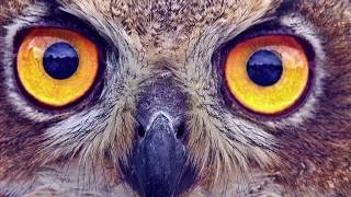 The Owl: Symbolism, Mythology, Facts and Quotes.