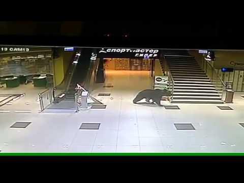 Ужас, медведь устроил погром в магазине