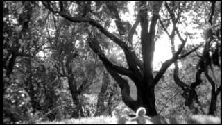Crazy-Quilt Trailer