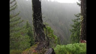 Missing Man Taken By Bigfoot In Oregon! - Pacwest Bigfoot