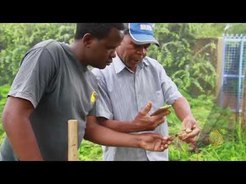 هذا الصباح-تطبيق جديد يسهل عمل المزارعين الكينيين  - 14:24-2018 / 5 / 15