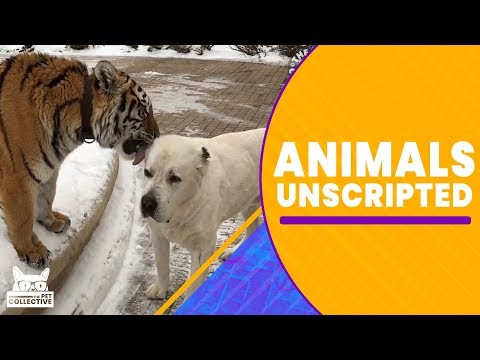 Animals Unscripted | The Pet Collective