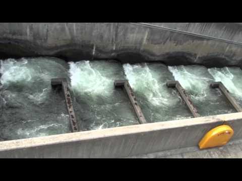 ScienceMan Digital Lesson - Biology - Fish Ladders