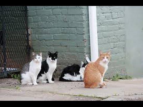 C mo alejar a los gatos de nuestras plantas facilisim for Ahuyentar gatos jardin