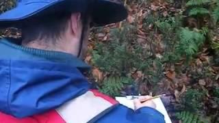Inventaire de bois mort en vieille forêt dans la région de la Capitale Nationale   Partie 2