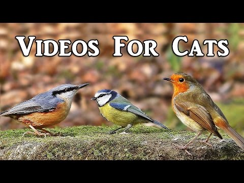 Thumbnail: Videos for Cats to Watch : Woodland Birds Spectacular