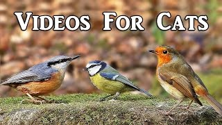 Videos for Cats to Watch : Woodland Birds Spectacular