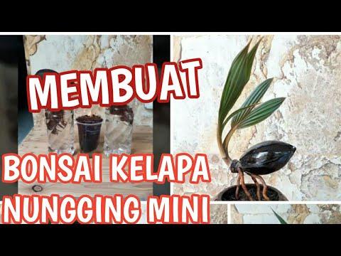 Membuat Bonsai Kelapa Nungging Batok Mini Youtube