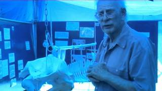 Professor Malcolm Clarke talks about his research into Pygmy Sperm Whales