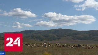 В Хакасии введут новые меры поддержки для фермеров из отдаленных сел - Россия 24
