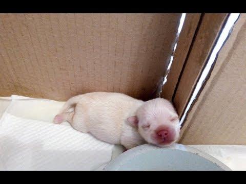 Как выкормить новорожденного щенка без собаки-мамы