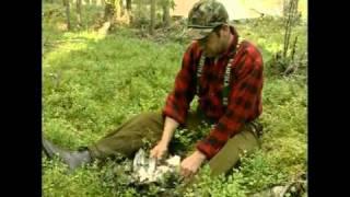 Видео об охоте с Карело-Финской Лайкой
