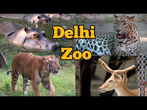 Delhi Zoo/ दिल्ली का चिड़ियाघर