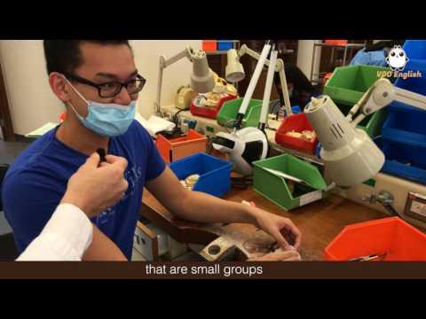 China Daily Hong Kong: HKU Faculty of Dentistry