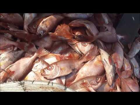 Sasoon Dock - Colaba Fish Market