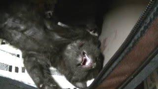 毎日黒ちゃんとプ~ちゃん・他の猫ちゃんとのんびりと暮らす愉快なオバー...