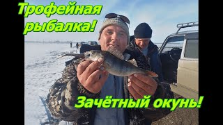 Трофейная рыбалка на окуня Советую посмотреть