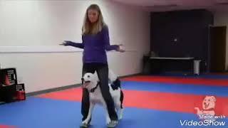 كلب يرقص على( اغنية) 😍(انرك)🙄🎵🎵🎵 بيلندو🇲🇦😙😙