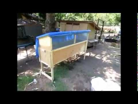 How To Grow Black Soldier Fly Larvae Bsfl Youtube