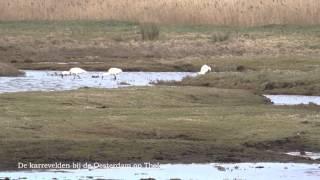 Vogels kijken aan de zuidkant van het eiland Tholen