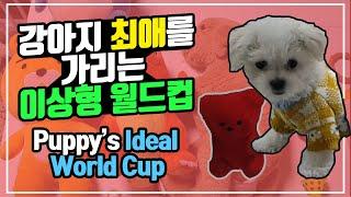 강아지 이상형 월드컵 -장난감편 & 사람편 (feat.…