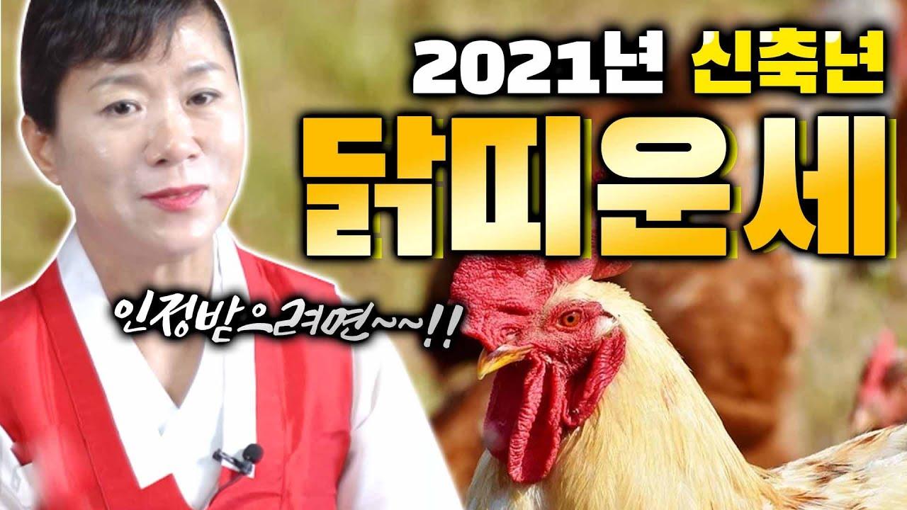 2021년 신축년 닭띠운세 알려드립니다🐔 [ 93년생 81년생 69년생 57년생 ] 인정 받으려면 XX을 잘 해라!