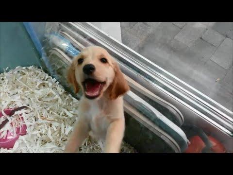 Eminönü Evcil Hayvan Pazarı (Pet Shop) 2015 / Istanbul