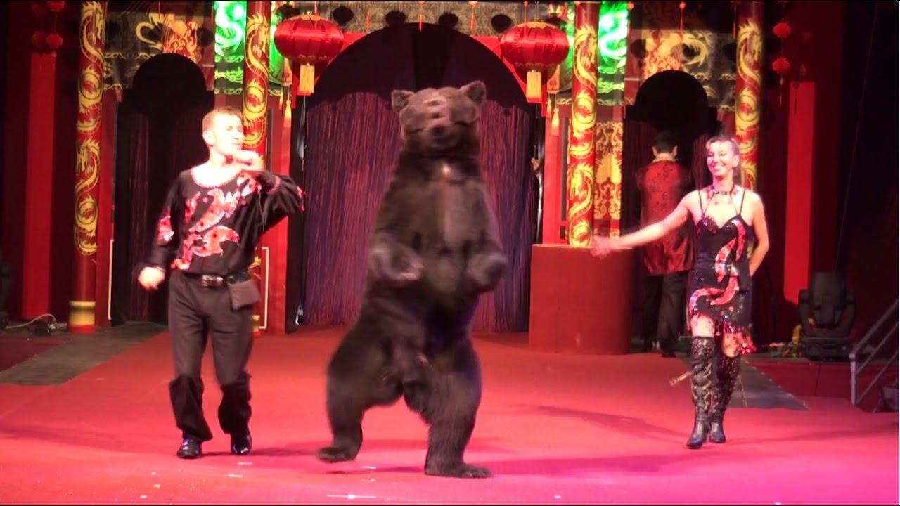 Dancing circus bear-8259