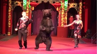 Circus. The show of different animals. Bear and dogs.