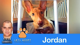Hope For Paws Rescue Poor Little Jordan with Big Ears