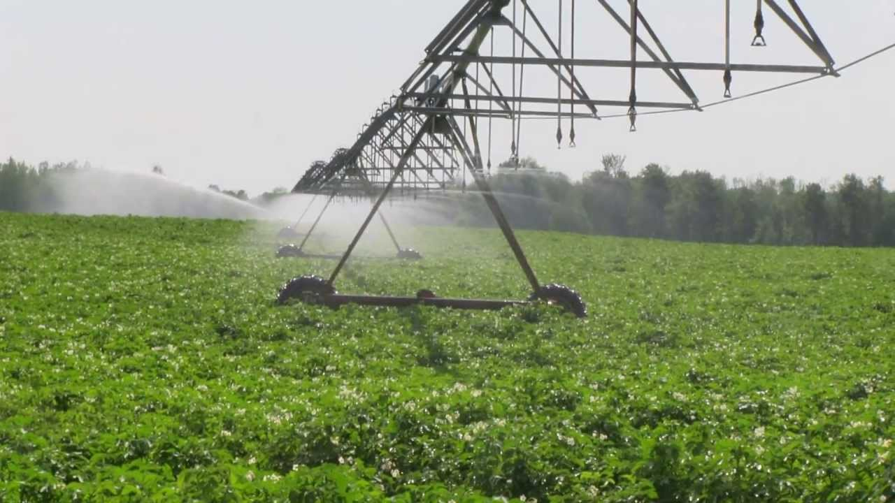 Image result for potato irrigation