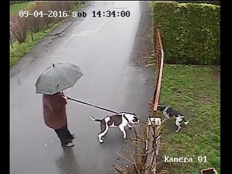 Cat Breaks Up Dog Fight