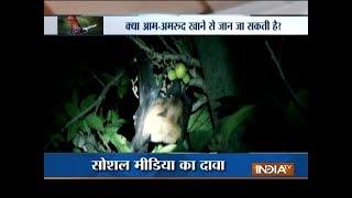 Aaj Ka Viral: Mystery behind the deadly and rare Nipah virus