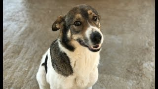 LIVE: Adoptable Dog Who Lost Her Puppies Looking for New Family | The Dodo