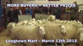Longtown Mart Cheviot Hoggets - March 12th 2015