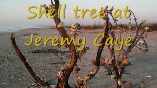 Shell Collecting at Edisto Beach with Perry Rush